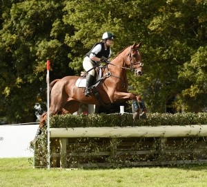 Sergeant Squirrel 24 years old ridden by Lauren Marsh and fed on Conditioning Mash2